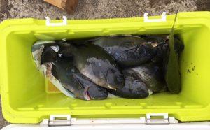 寒グロ、数も型も好釣!(12月18日)