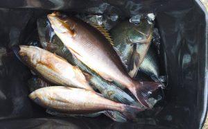 寒グロ良型釣果(2月5日)